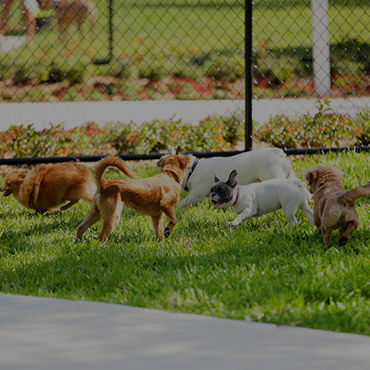 Large Dog Park at Mountain Ridge Manor Apartments